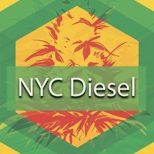 NYC Diesel (New York City Diesel, New York Diesel), AskGrowers