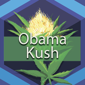 Obama Kush (Obama OG, Obama OG Kush), AskGrowers