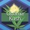 Obama Kush (Obama OG, Obama OG Kush)