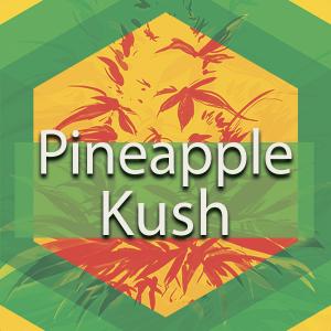 Pineapple Kush, AskGrowers