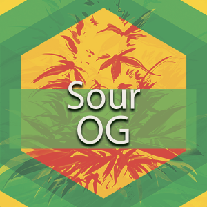 Sour OG (Sour OG Kush, 818 Headband), AskGrowers