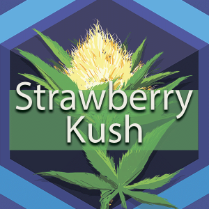 Strawberry Kush, AskGrowers