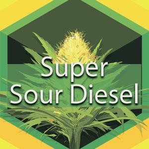 Super Sour Diesel, AskGrowers