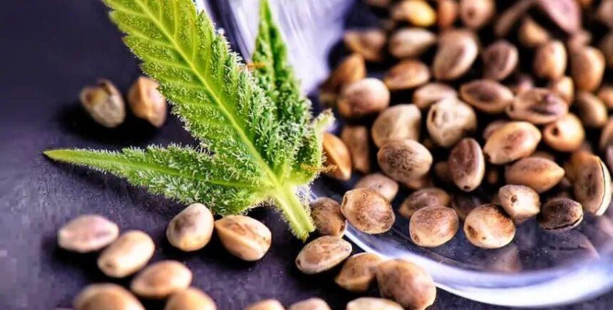 Crop-King-Seeds 3 image