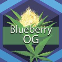 Blueberry OG Logo