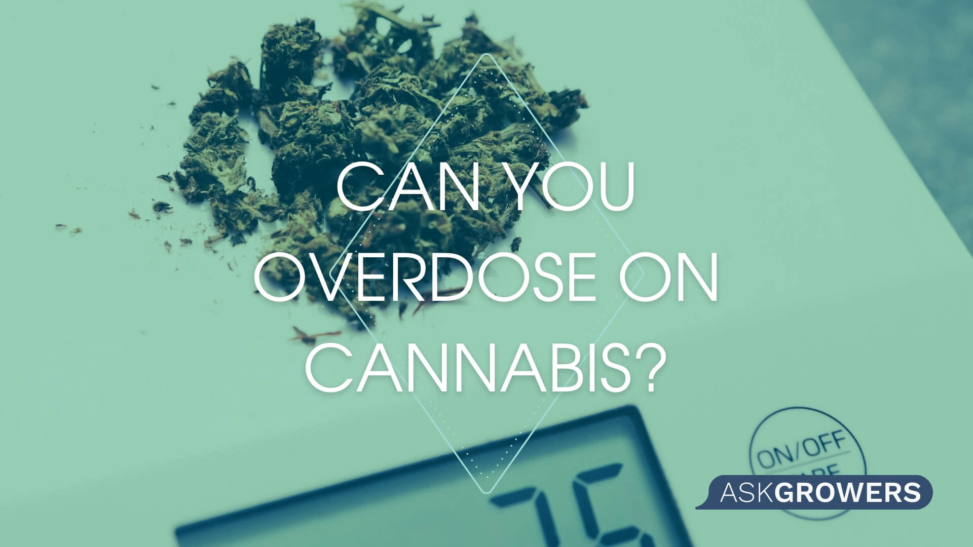 Can You Overdose From Consuming Cannabis?, AskGrowers