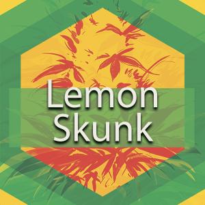 Lemon Skunk, AskGrowers