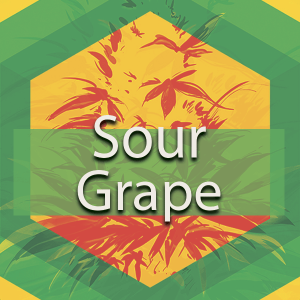 Sour Grapes (Grape Stomper), AskGrowers