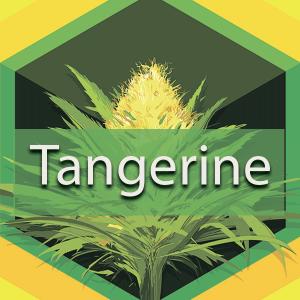 Tangerine, AskGrowers