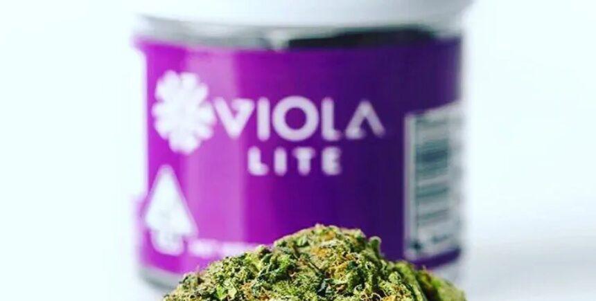 viola 1 image