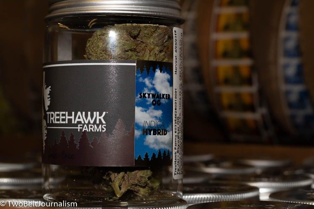 treehawk 1image