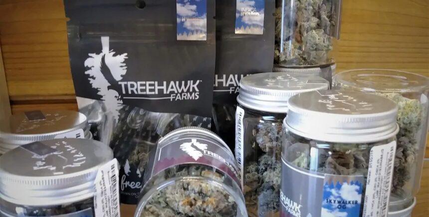 treehawk 3 image