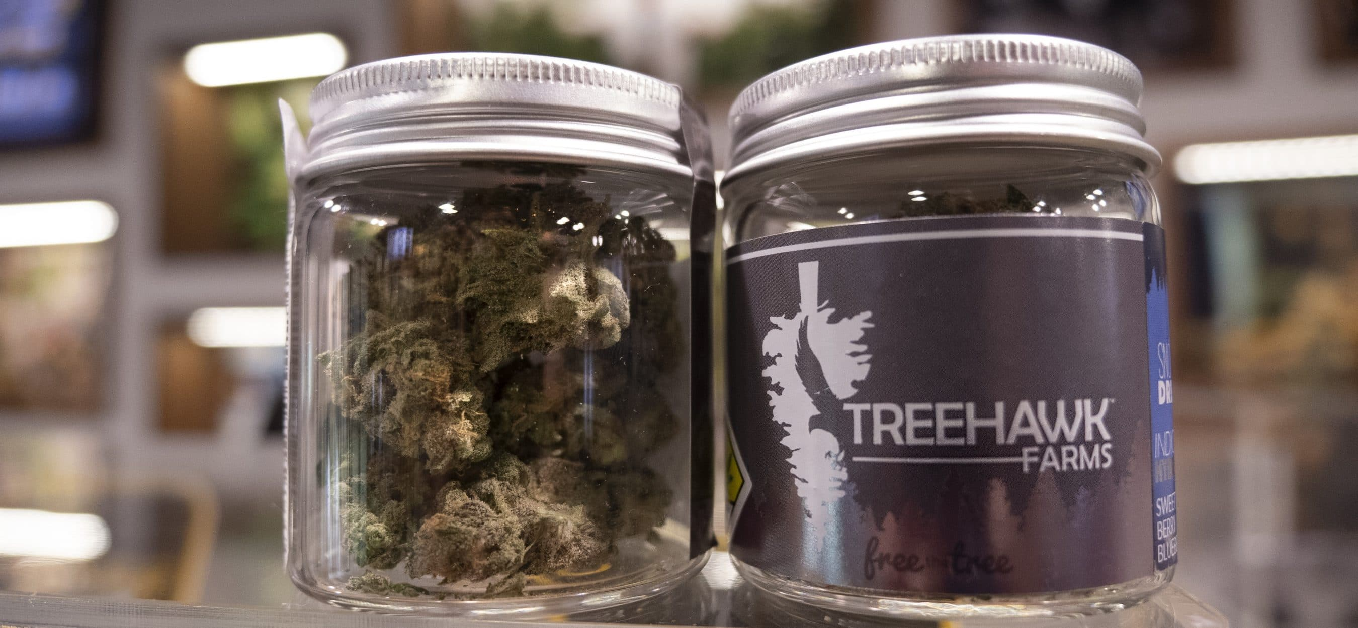 treehawk 7 image