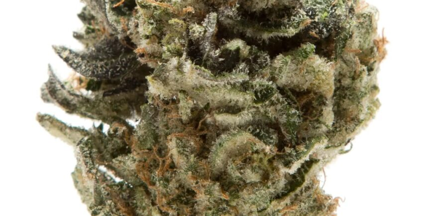 animal mints strain photo