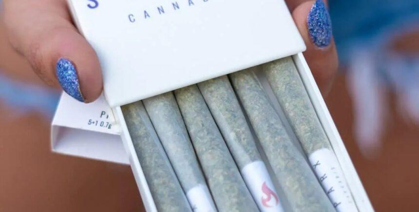 sparx cannabis photo 4