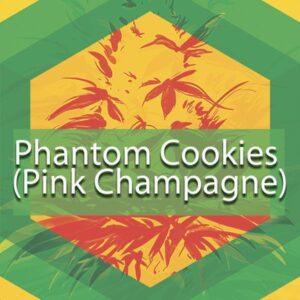 Phantom Cookies (Pink Champagne), AskGrowers