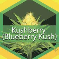 Kushberry (Blueberry Kush) Logo
