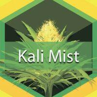 Kali Mist Logo
