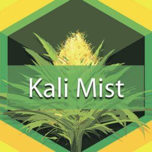 Kali Mist, AskGrowers