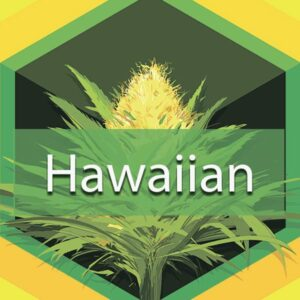 Hawaiian, AskGrowers