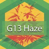 G13 Haze Logo