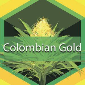 Colombian Gold (Santa Marta Colombian Gold, Santa Marta), AskGrowers