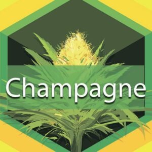 Champagne, AskGrowers