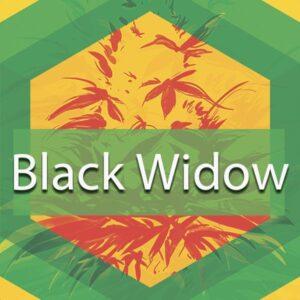 Black Widow, AskGrowers