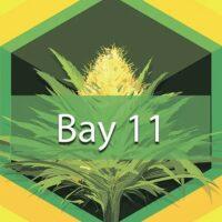 Bay 11 (Granddaddy Bay 11) Logo