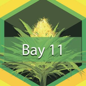 Bay 11 (Granddaddy Bay 11), AskGrowers