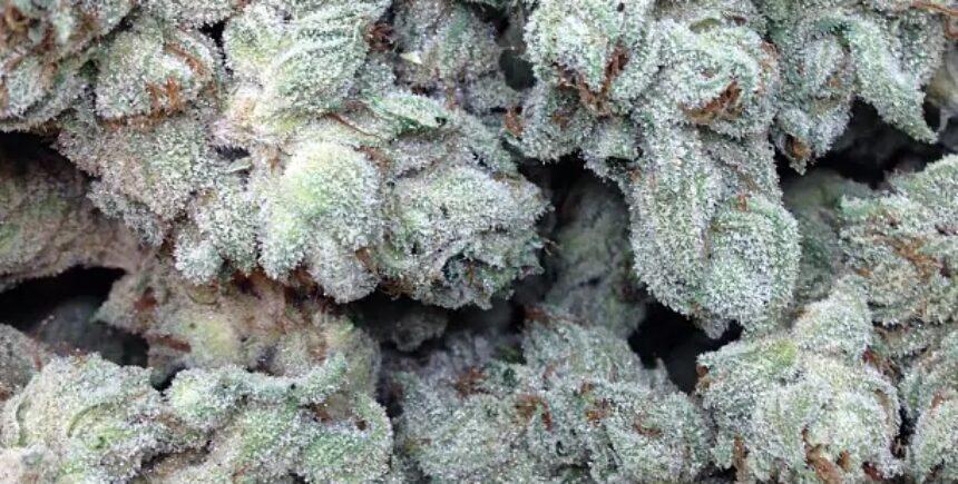 somari strain photo