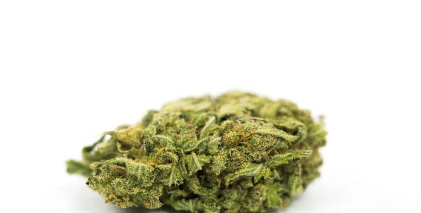 GreenRibbon strain photo 2