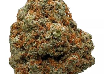Jack Flash strain photo 1
