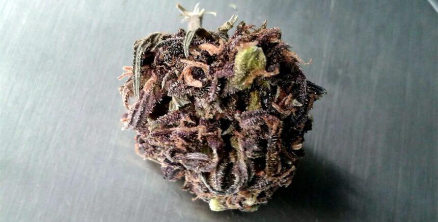 PurplePower strain photo 2