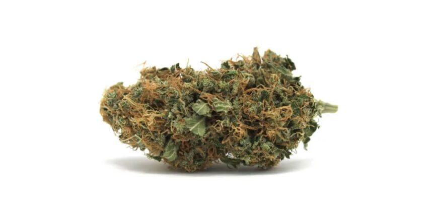 Sour Jack Weed Strain photo 1