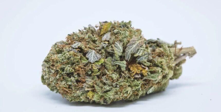 Platinum Bubba strain photo 1