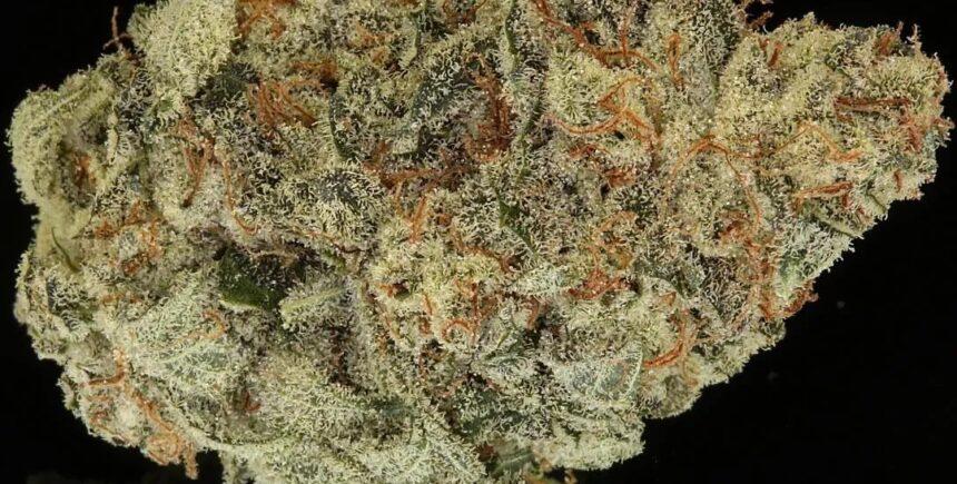 OG Bubba strain photo 2