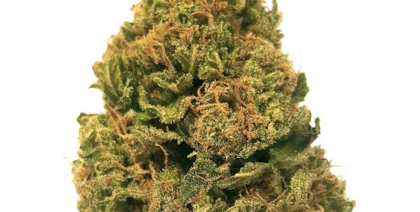 Hash Plant strain photo 2