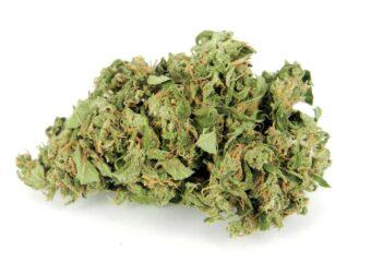 Kushberry (Blueberry Kush) strain photo 1