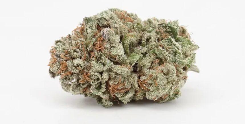 Platinum Bubba strain photo 2