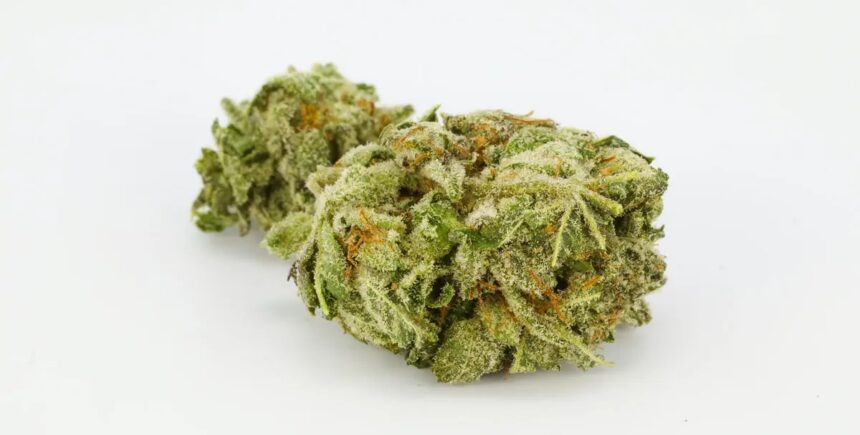 Hindu-Kush strain photo2