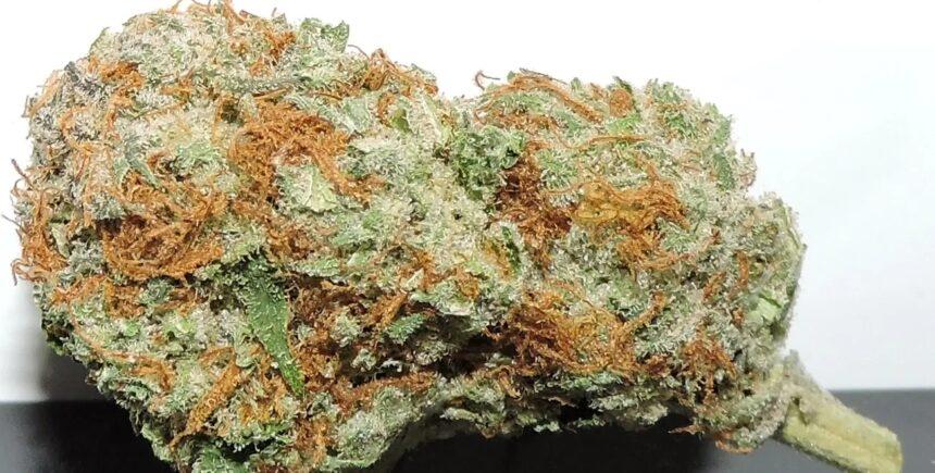Alien Marijuana Strain photo 1