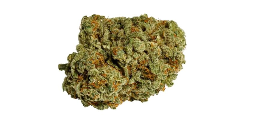 Afghani weed strain