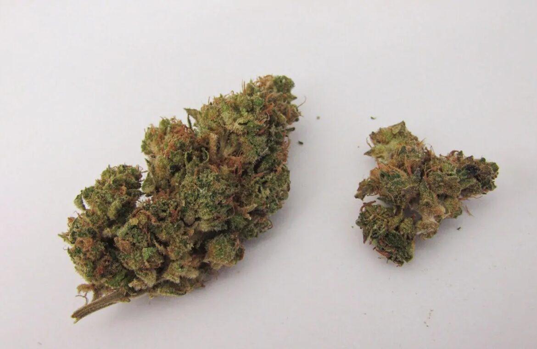 Herijuana (Herojuana) strain photo 2