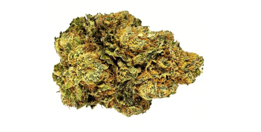 HP13 weed strain picture