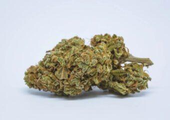 Drizella strain photo 1