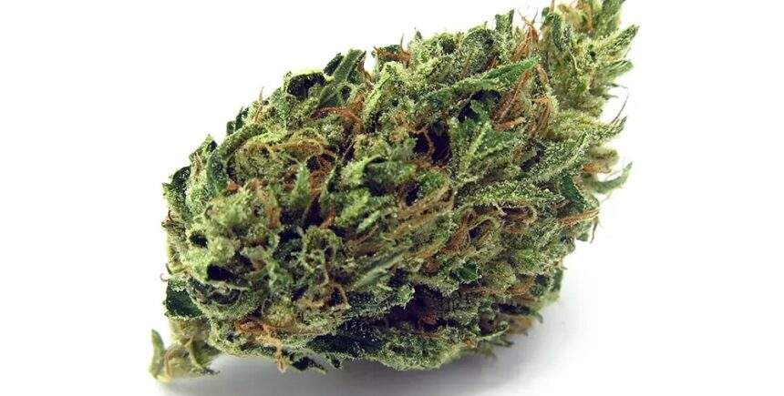logic diesel strain photo
