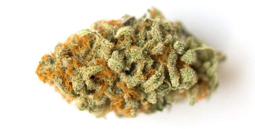 orange crush strain photo2