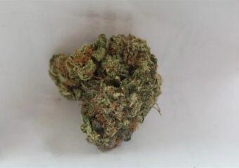 Sour Apple strain photo 2