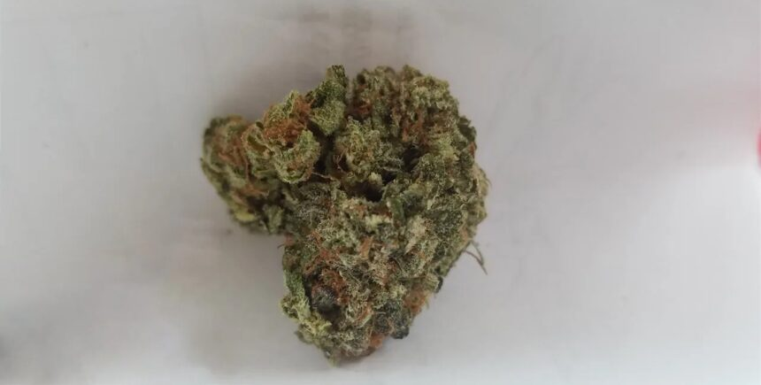 sour apple strain photo 2